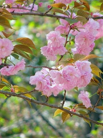 Japan - Mit dem Zug Nippons Kulturlandschaften entdecken - 1 - (c) 2014 Erika Köllmann